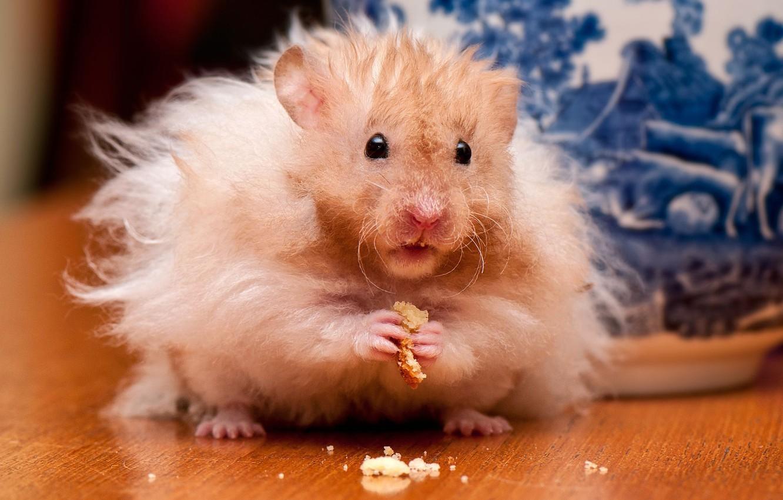 Photo wallpaper hamster, rodent, crumbs
