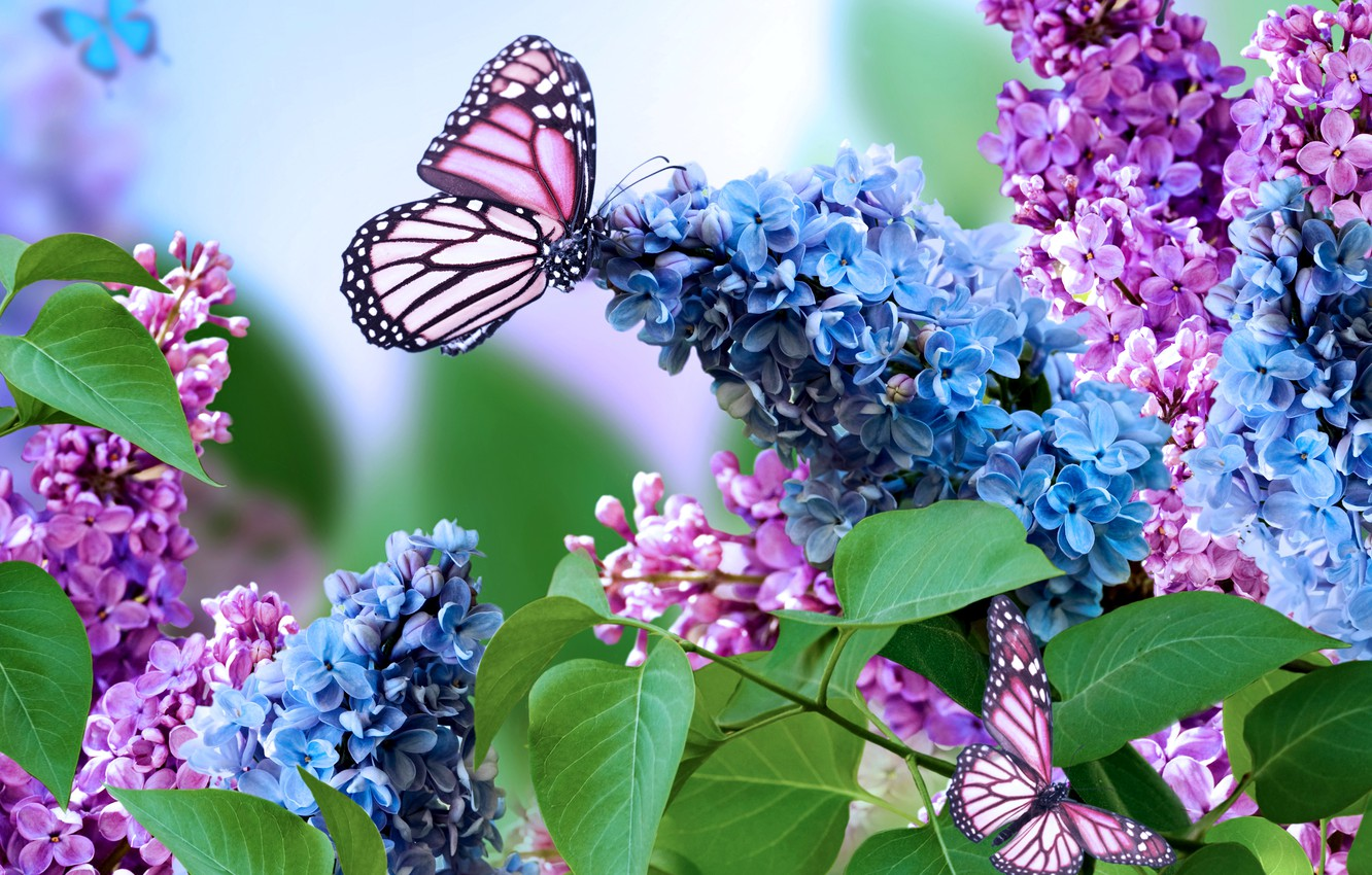Photo wallpaper nature, collage, butterfly, spring, lilac, inflorescence