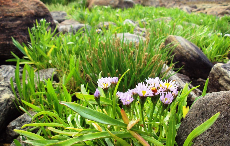 Photo wallpaper sea, stones, flowers, lilac