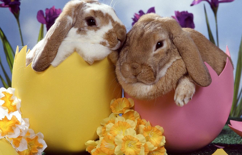 Photo wallpaper flowers, eggs, Rabbits, Easter