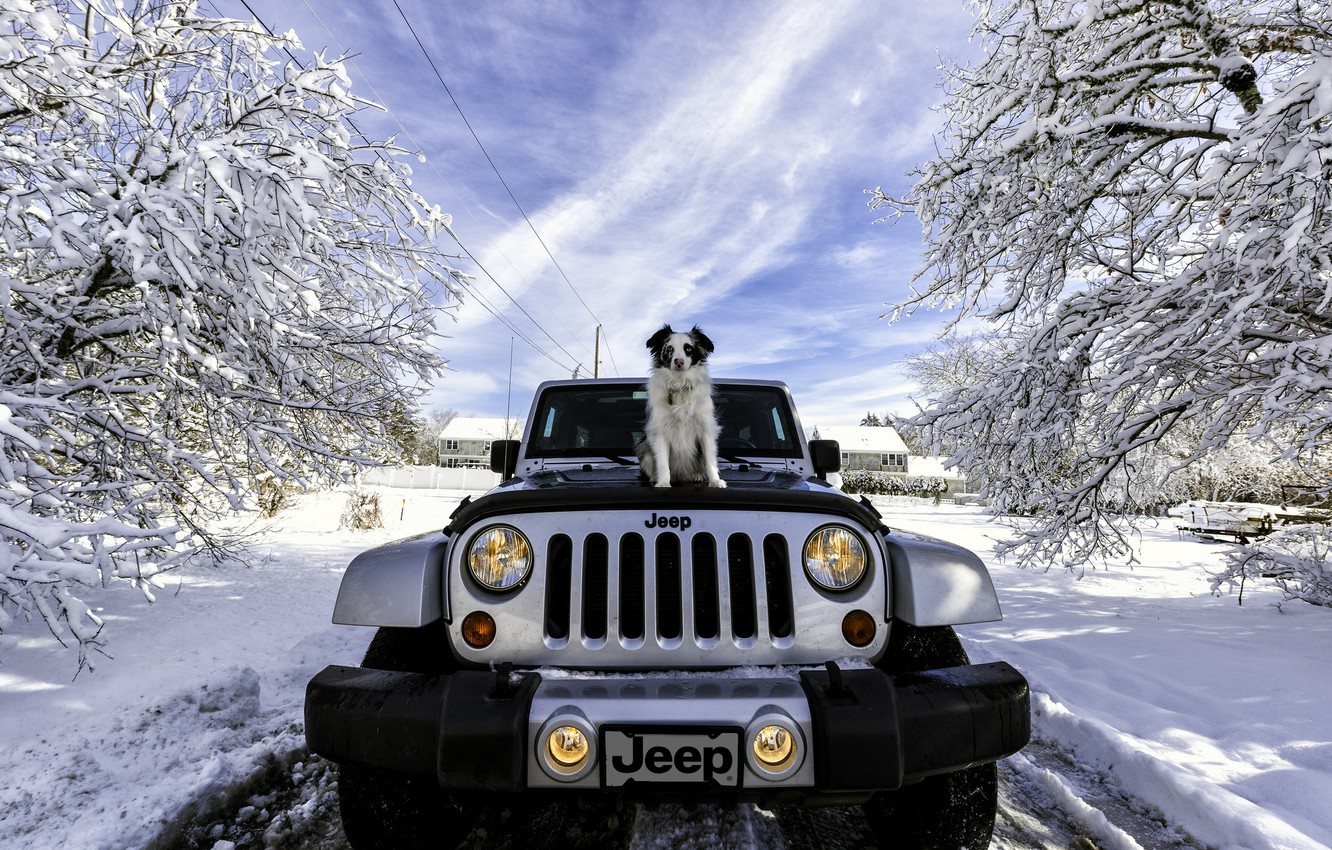 machine, snow, dog, Jeep, Jeep Wrangler