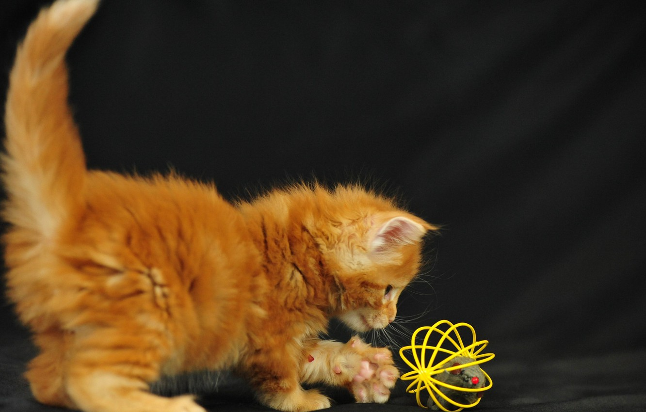 Photo wallpaper cat, the game, baby, kitty