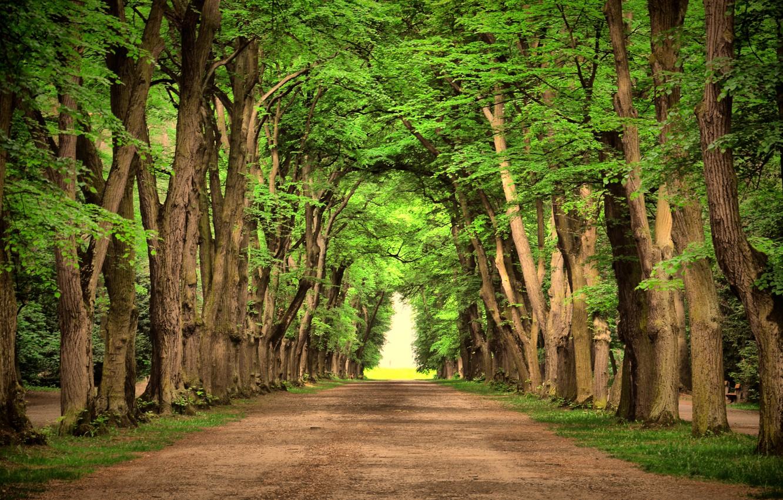 Photo wallpaper trees, landscape, nature, green, green, road, road, trees, landscape, nature, beautiful, beautiful