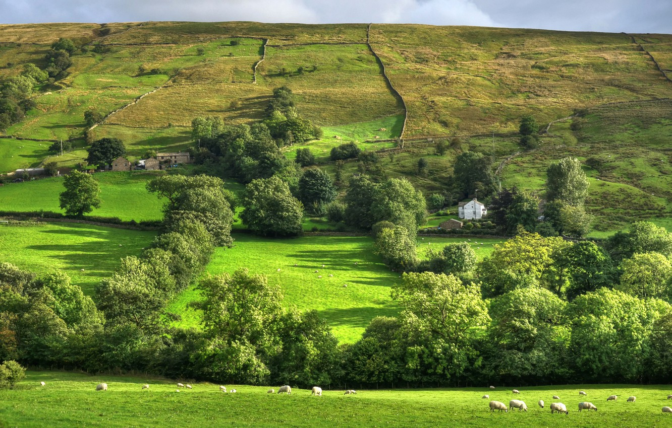 Photo wallpaper greens, summer, trees, field, sheep, pasture, UK, houses, Yorkshire, Dentdale