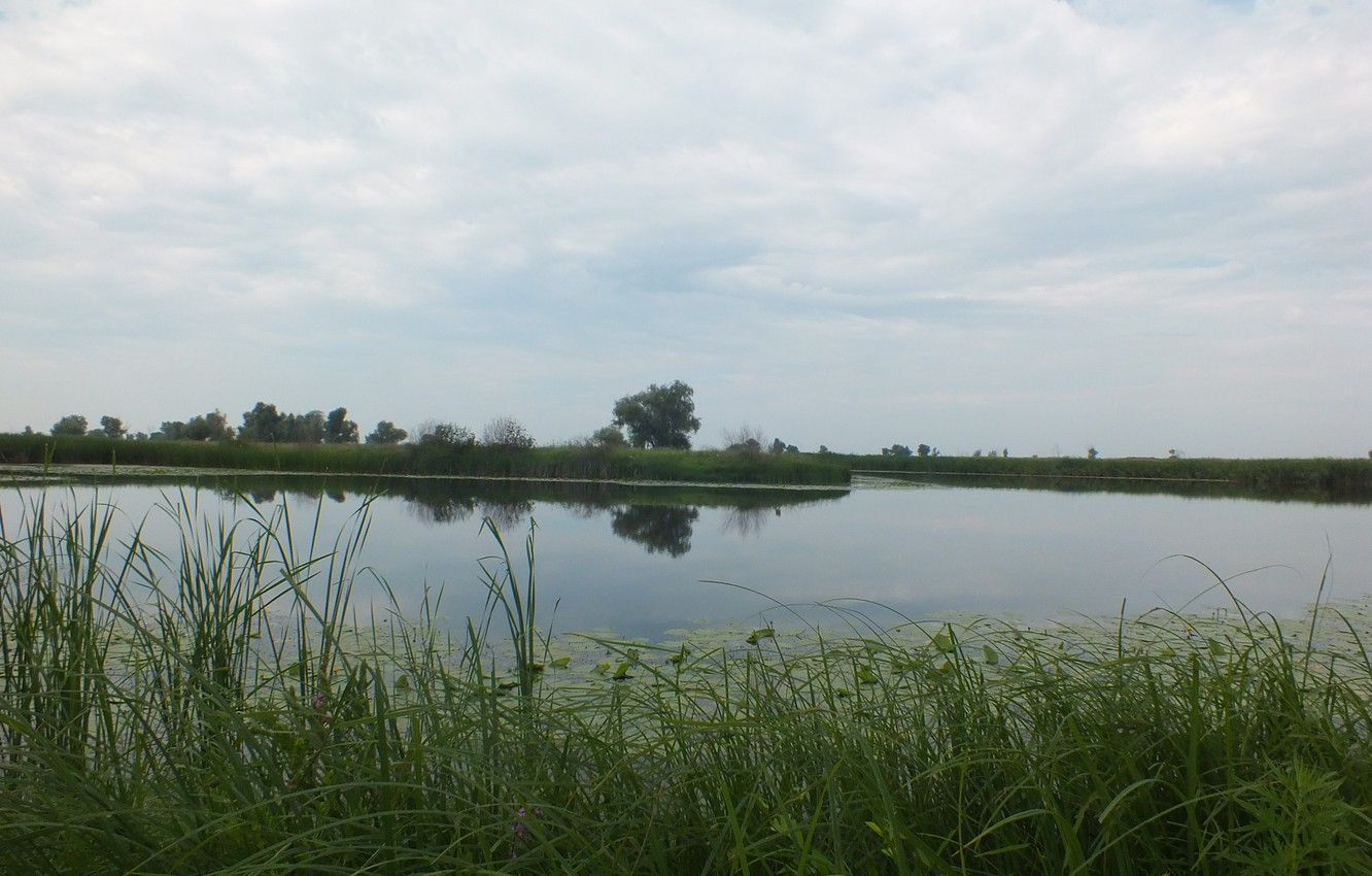Photo wallpaper greens, grass, trees, reflection, reed, the bushes, Volga, water lilies, river