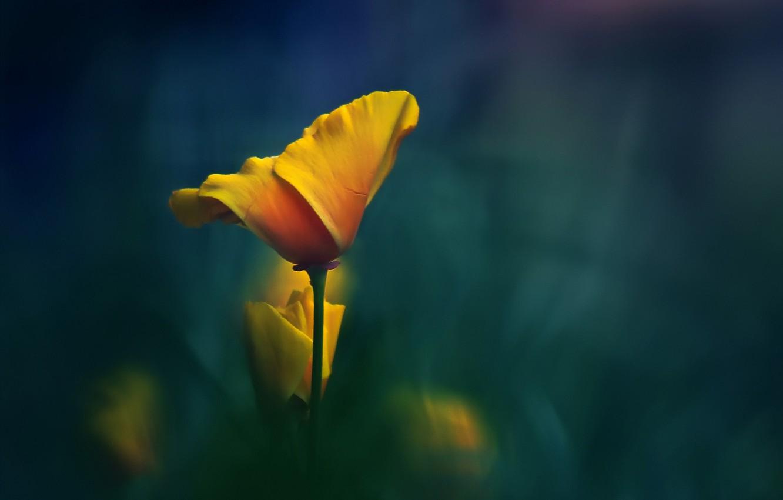 Photo wallpaper flower, macro, yellow, background, stem