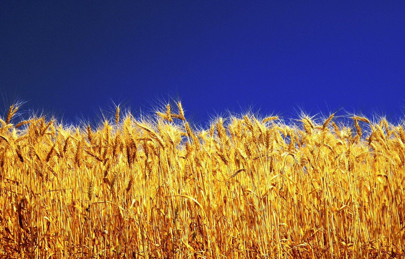 Photo wallpaper the sky, bright colors, yellow grass