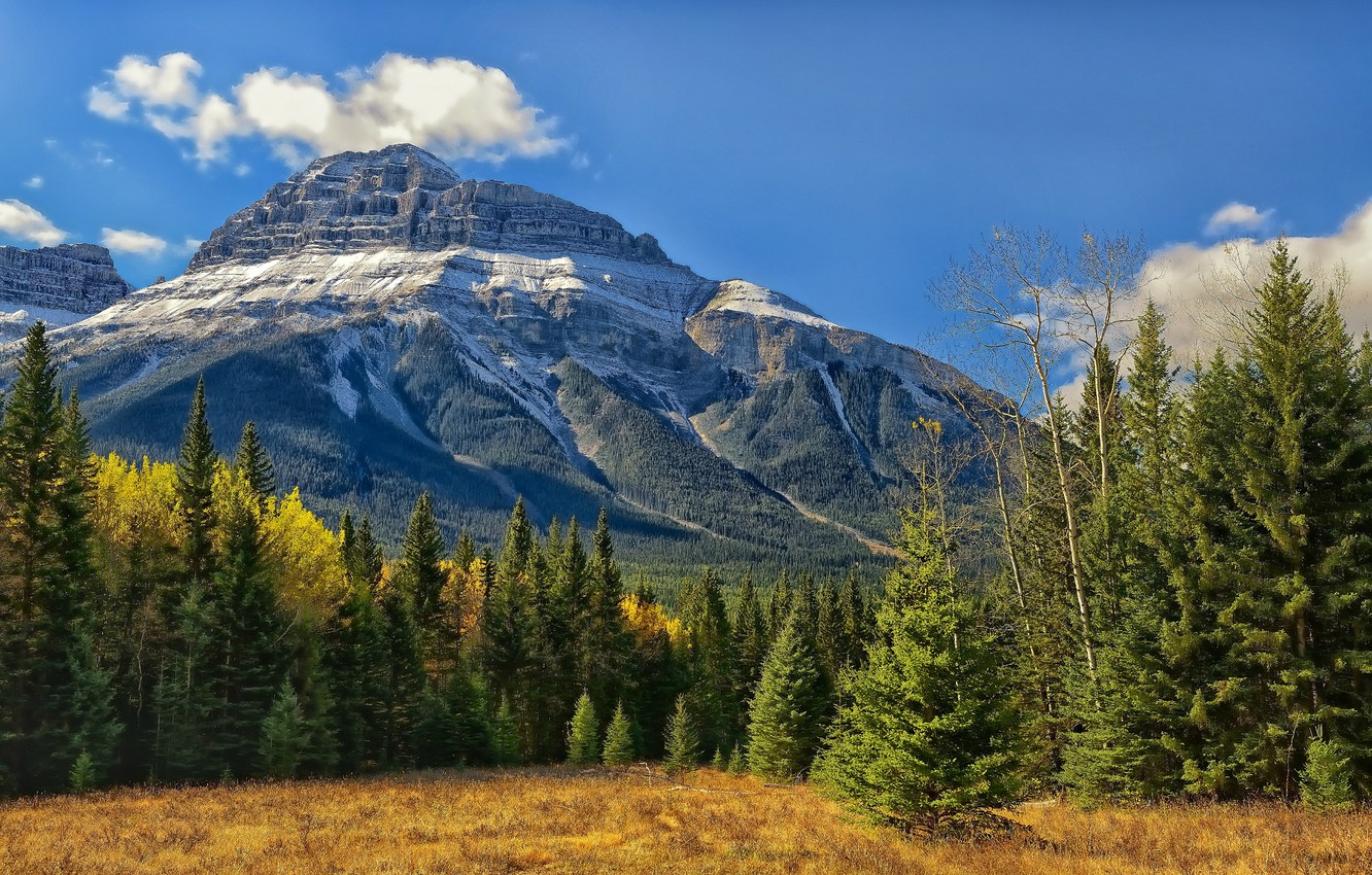 Photo wallpaper forest, trees, Canada, Albert, Banff National Park, Alberta, Canada, Rocky mountains, Banff, Bow Valley, Canadian …