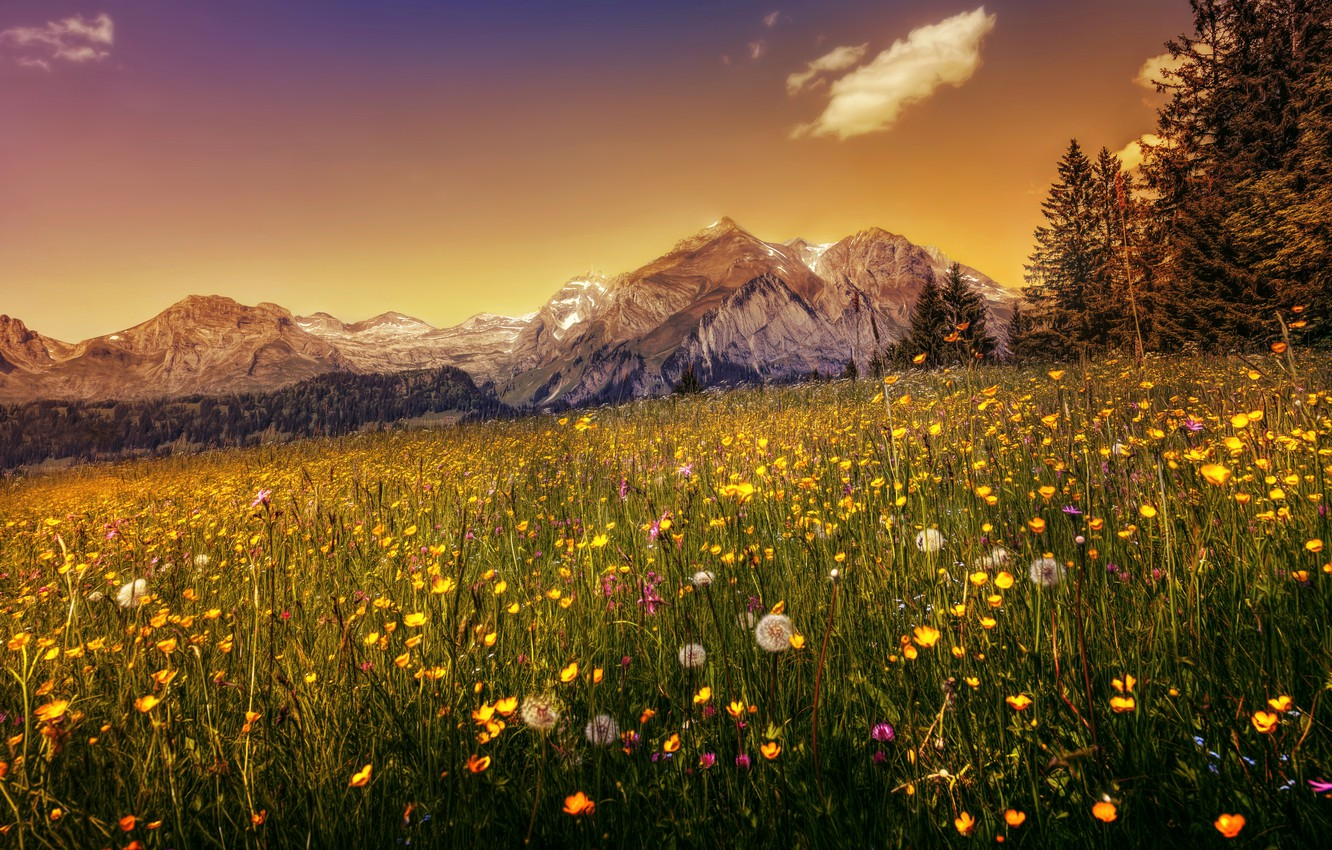 Photo wallpaper grass, trees, flowers, mountains, Switzerland, Alps, hdr, dandelions, forest, meadows, buttercups