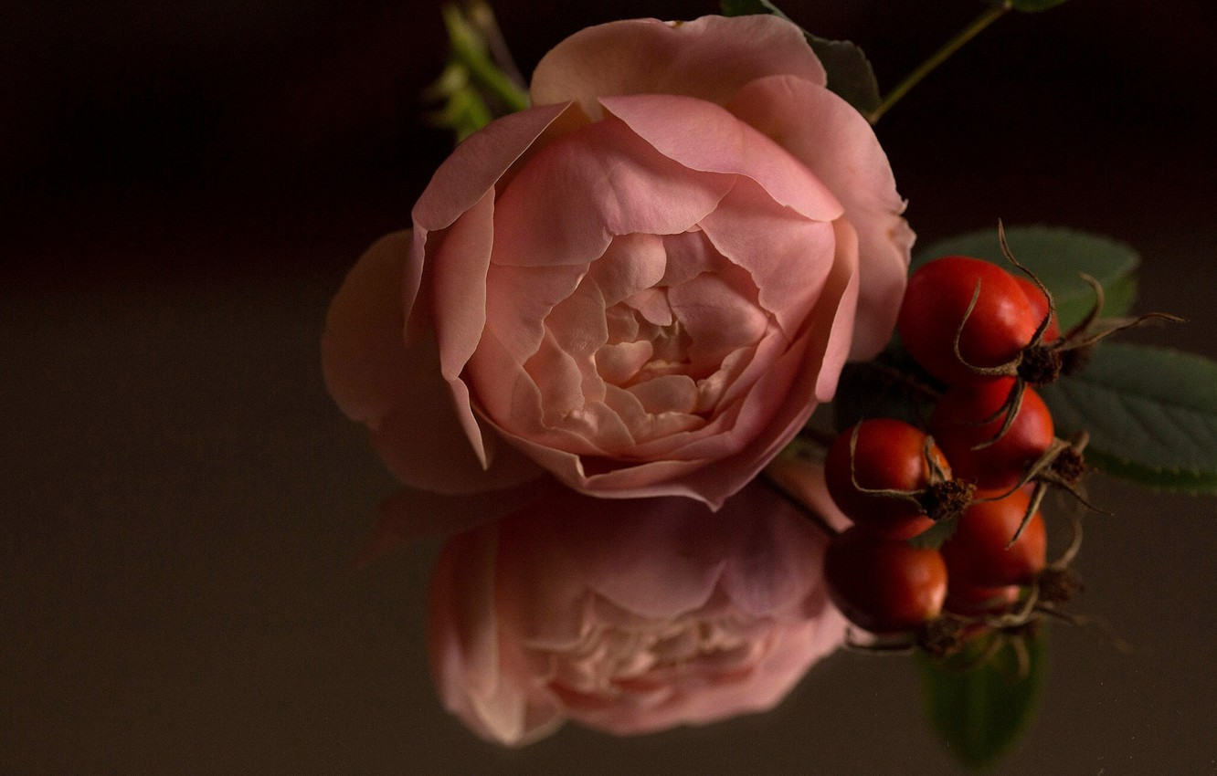 Photo wallpaper macro, reflection, rose, Bud, briar, rose hips