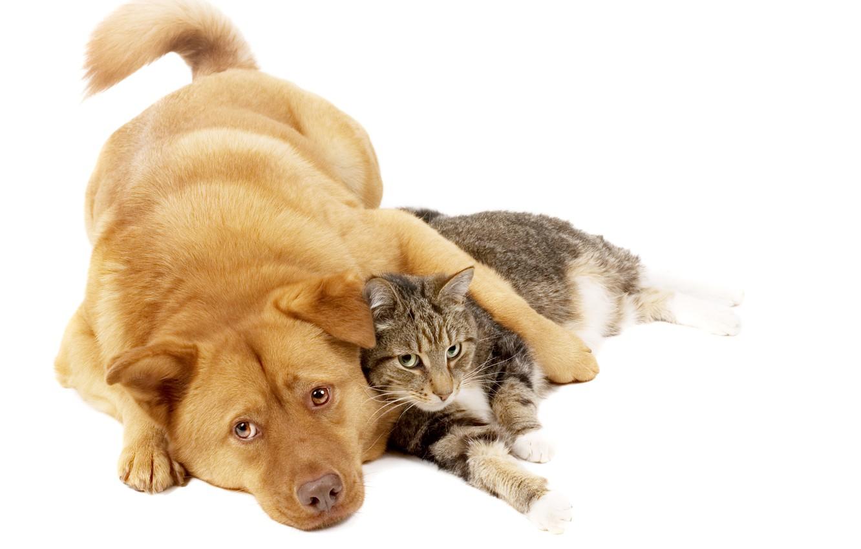 Photo wallpaper cat, cat, dog, red, friends, dog