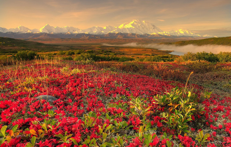 Photo wallpaper flowers, mountains, fog, 152
