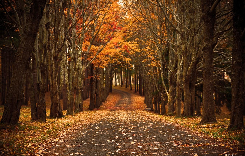 Photo wallpaper road, autumn, nature, foliage