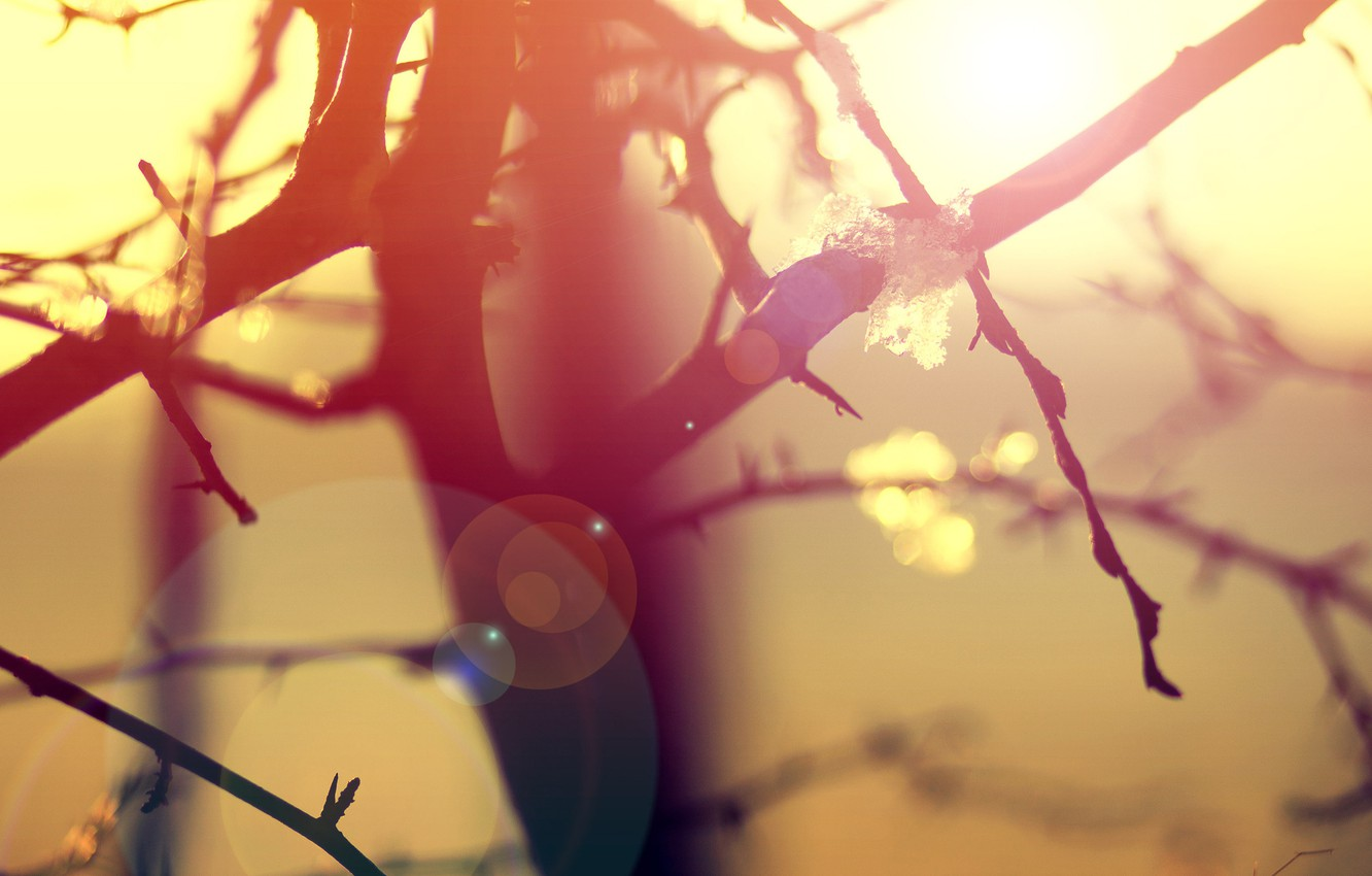 Photo wallpaper macro, light, branches, nature, tree, morning