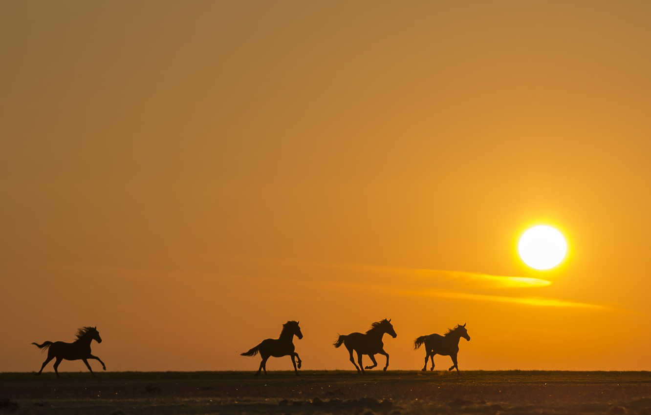 Wallpaper Field Sunset Horse Silhouette Running Images For Desktop Section Zhivotnye Download