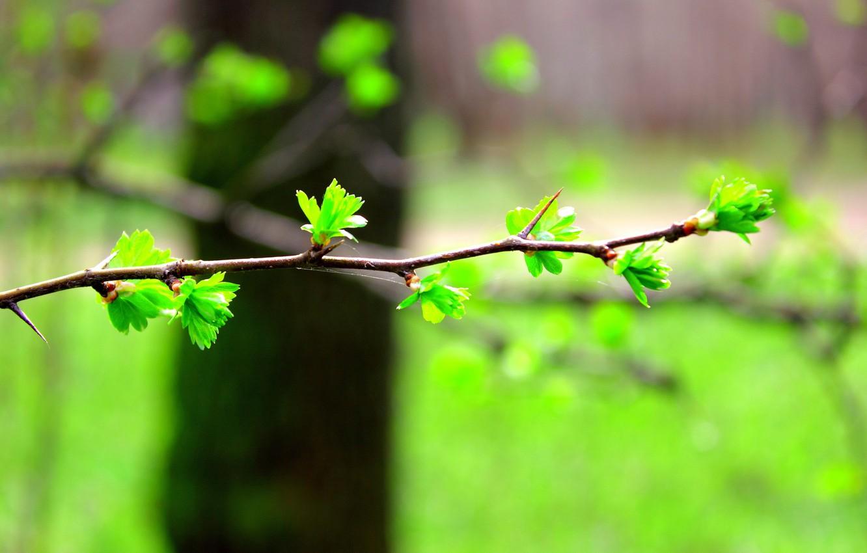Photo wallpaper leaves, blur, Branch