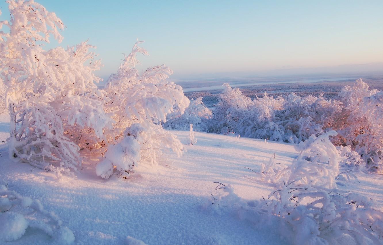 Photo wallpaper winter, the sky, light, snow, trees, horizon, solar