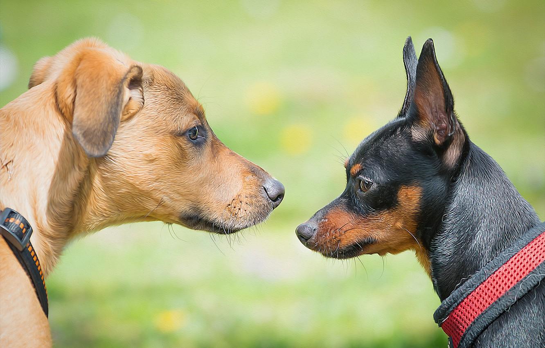 Photo wallpaper dogs, texture, muzzle