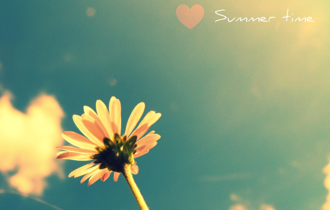 Photo wallpaper flower, summer, the sky, plant, heart, colours, time of the year, summer flower