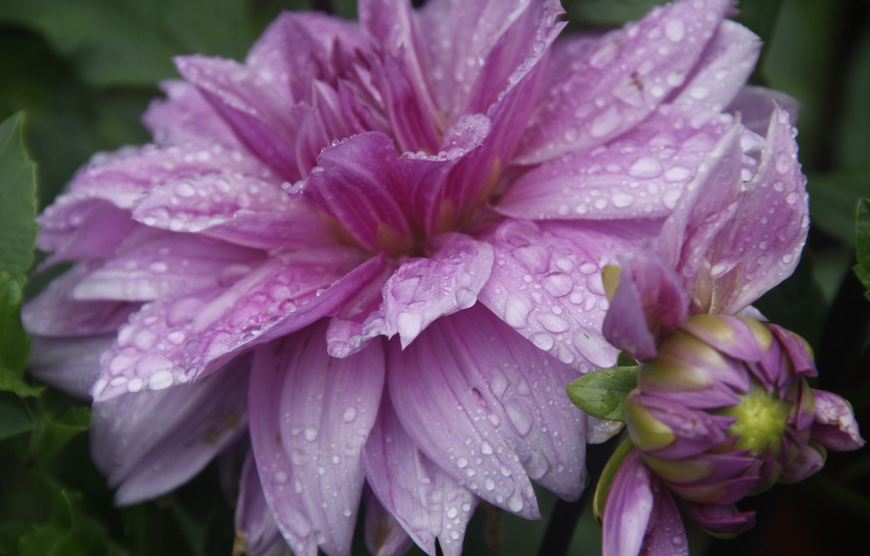 Photo wallpaper flower, drops, macro, nature, background, rain, Wallpaper, plant, garden, village