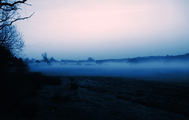 Photo wallpaper the sky, trees, fog, morning, silhouette