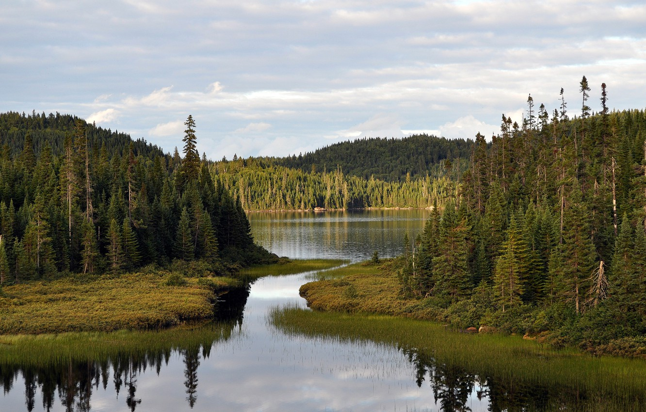 Photo wallpaper forest, the sky, nature, river, Bay