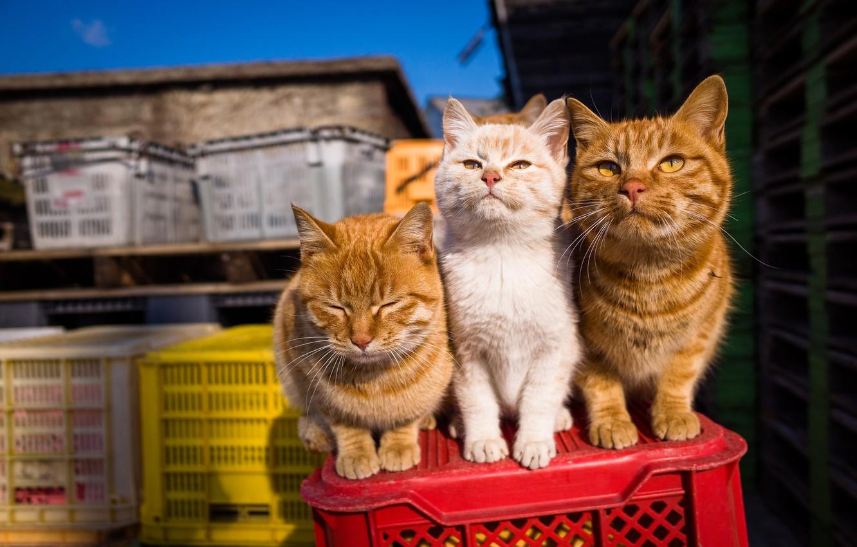 Photo wallpaper summer, look, cats, three