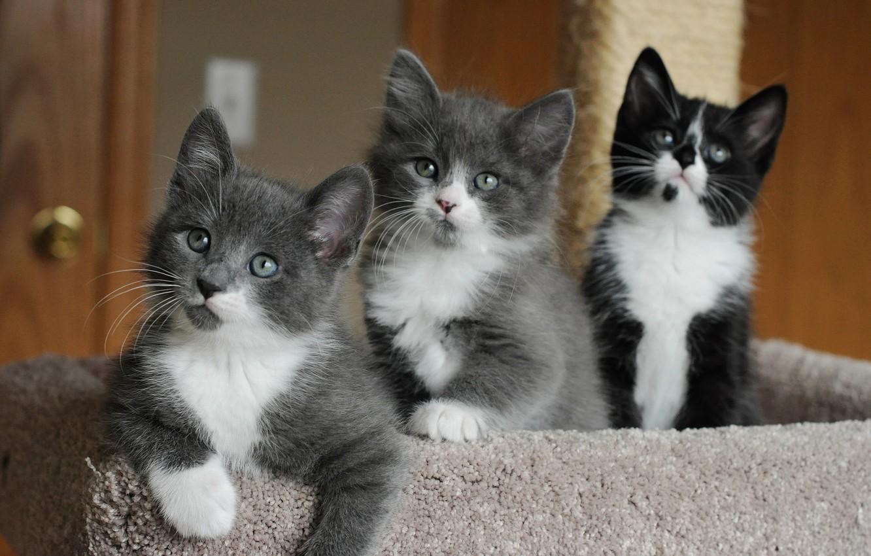 Photo wallpaper eyes, kittens, cute, faces