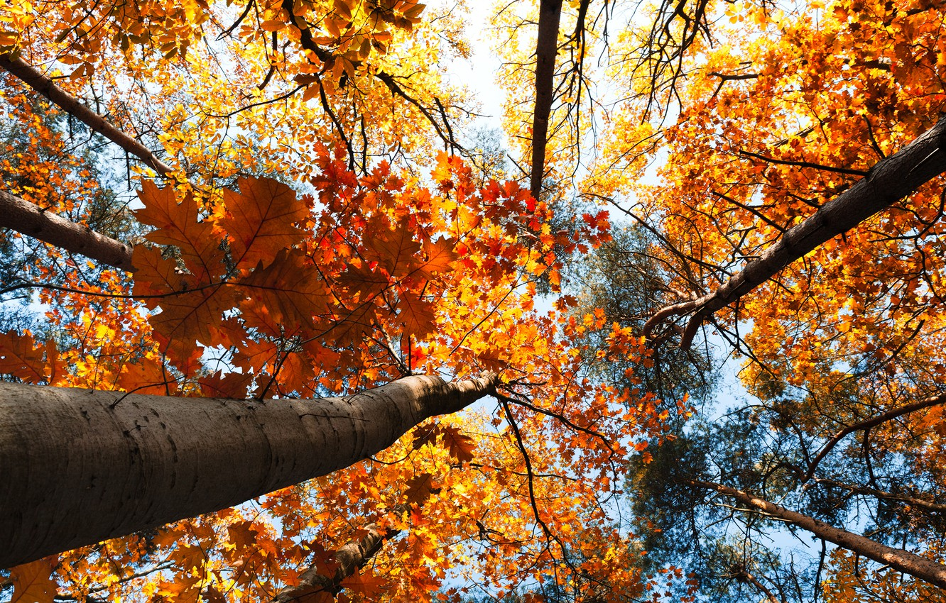 Photo wallpaper autumn, forest, the sky, leaves, trees, landscape, nature, forest, sky, trees, landscape, nature, autumn, leaves, …