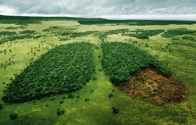 Photo wallpaper forest, trees, landscape, nature, river, Wallpaper, wallpaper, ecology, nature, wild, WWF, light, World, The felling …