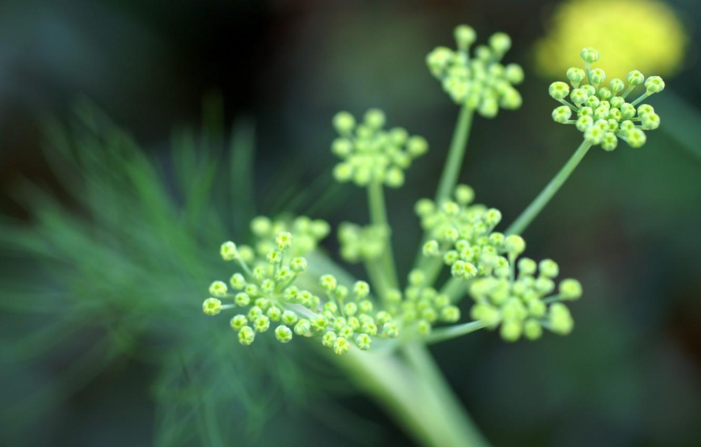Photo wallpaper flowers, Greens, focus