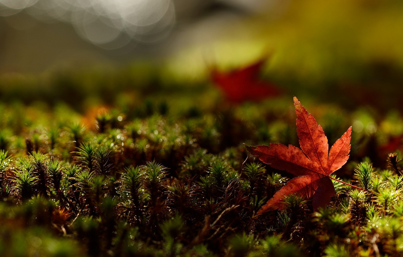 Photo wallpaper greens, grass, leaves, macro, red, background, Wallpaper, leaf, wallpaper, leaf, widescreen, background, full screen, HD …