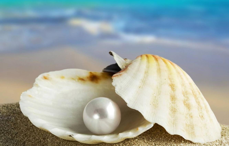 Photo wallpaper sand, sea, sink, shell, pearl, Marco, pearl
