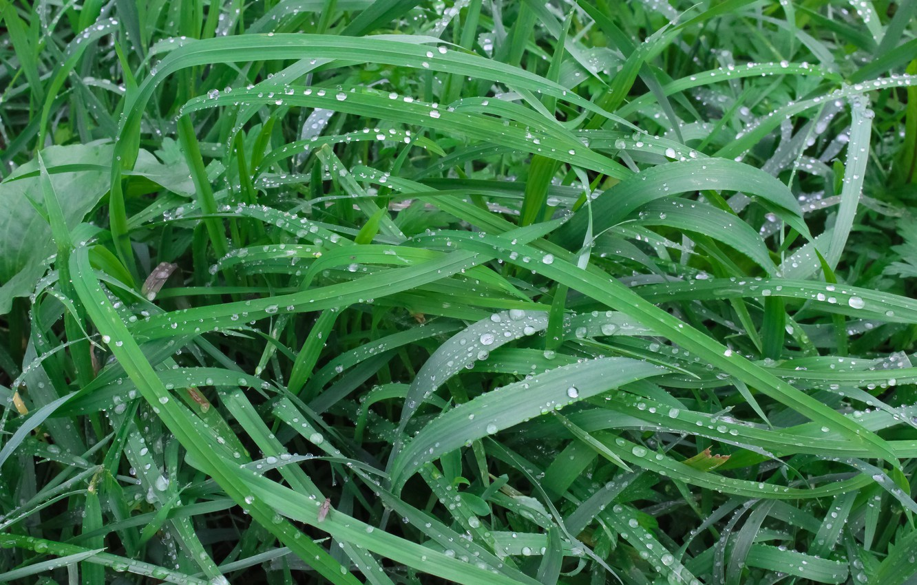 Photo wallpaper Grass, The Wallpapers, Raindrops