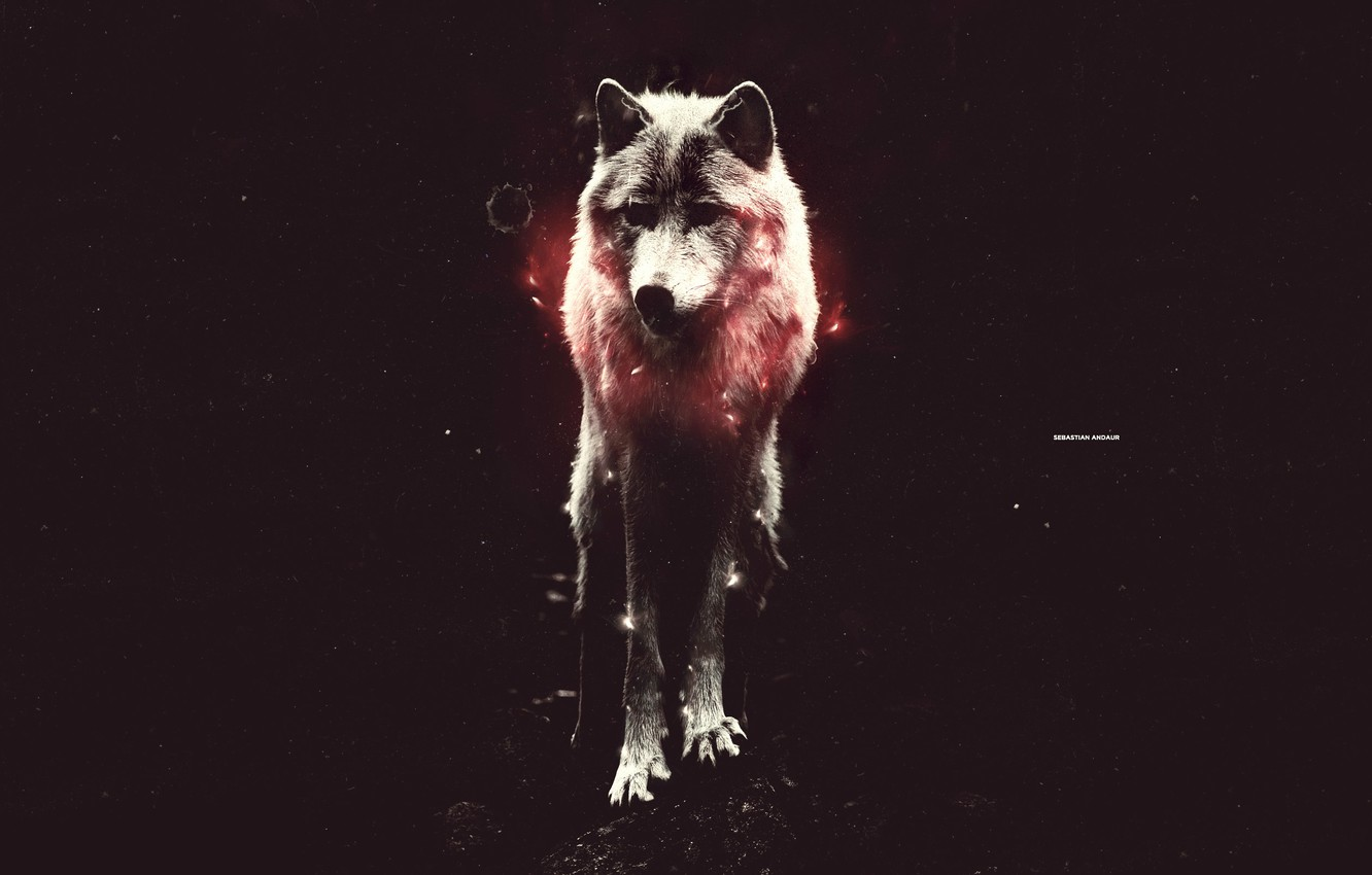 Photo wallpaper light, red, wolf, is