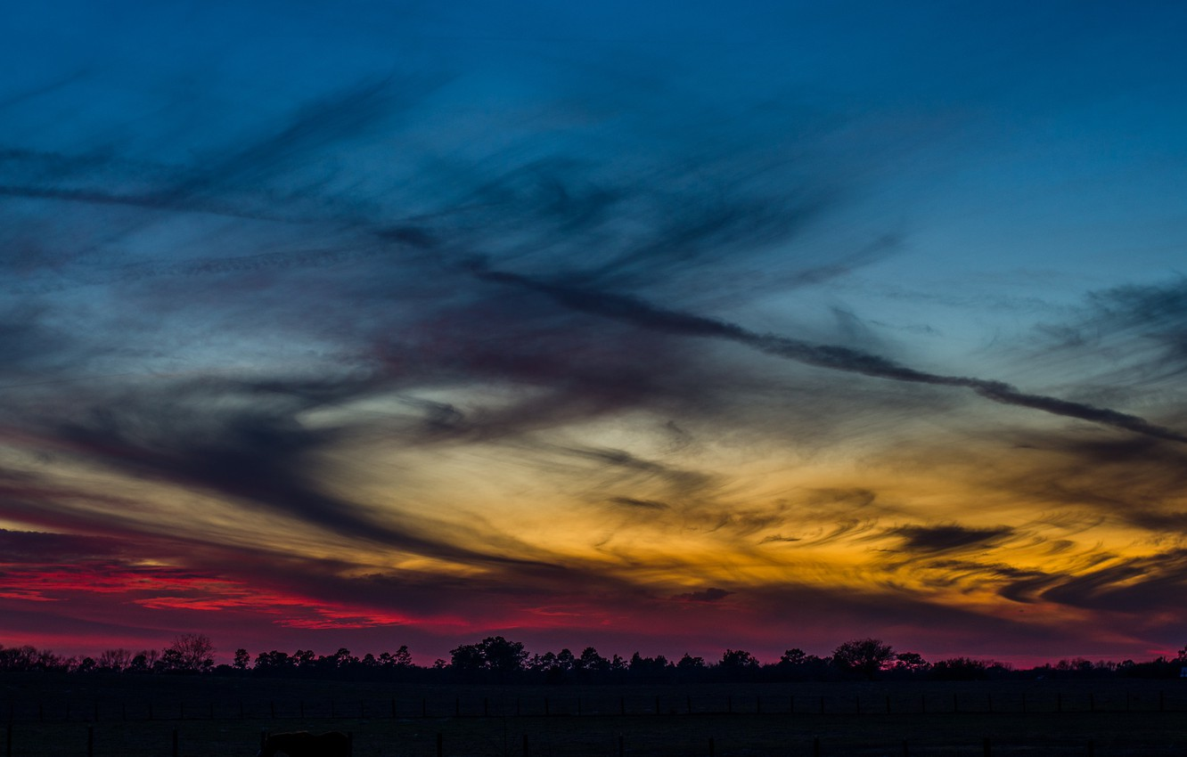 Photo wallpaper the sky, clouds, trees, sunset, the evening, Forest