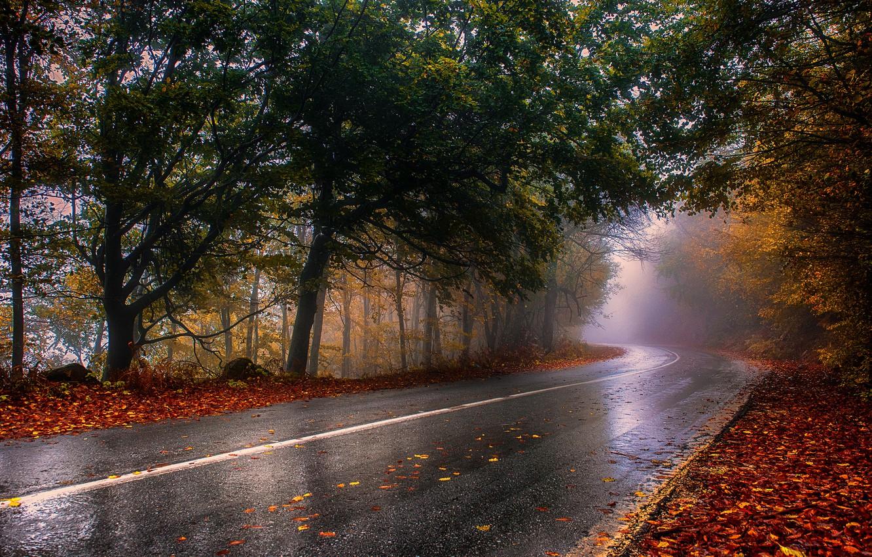 Photo wallpaper road, autumn, trees, landscape, nature, fog