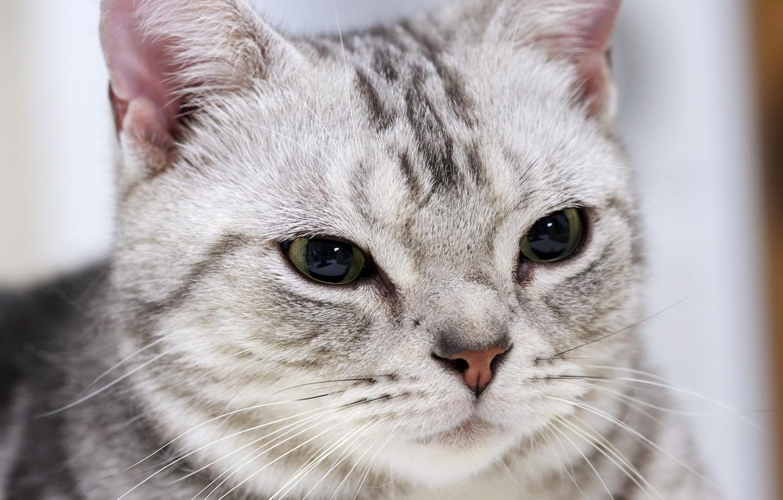 Photo wallpaper eyes, animal, Cat