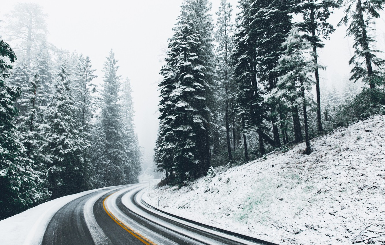 Photo wallpaper winter, road, forest, snow, nature