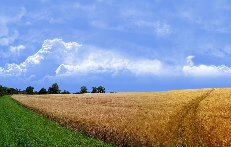 Photo wallpaper road, grass, Field