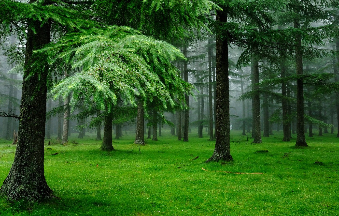 Photo wallpaper forest, grass, drops, nature, tree