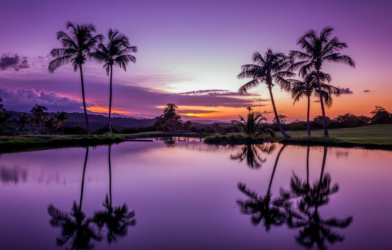Wallpaper water, sunset, tropics, reflection, palm trees ...