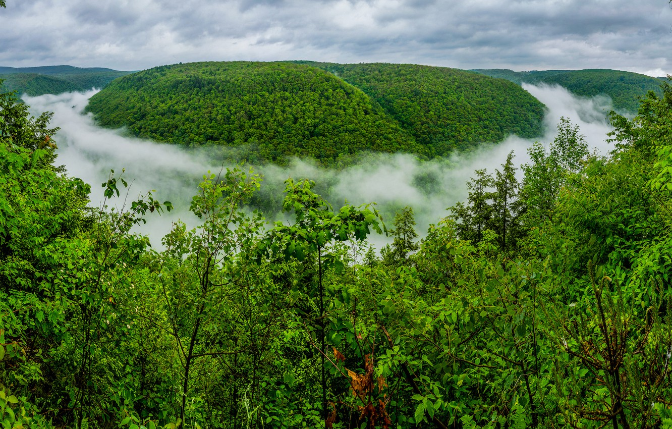 Photo wallpaper forest, fog, gorge, PA, The Grand Canyon, Pennsylvania, The Grand canyon of Pennsylvania, Pine Creek ...