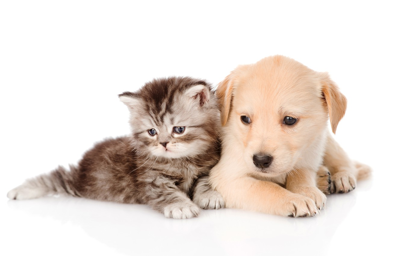Wallpaper Kitty Puppy Fluffy Puppy Kitten Images For