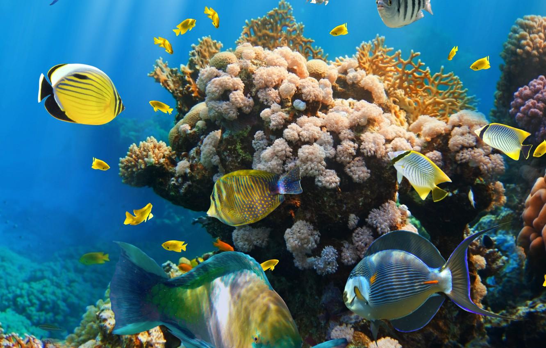 Photo wallpaper fish, the ocean, underwater world, underwater, ocean, fishes, tropical, reef, coral, coral reef