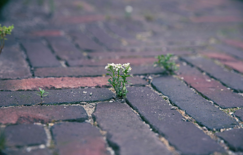 Photo wallpaper flower, stones, Rostock, bridge