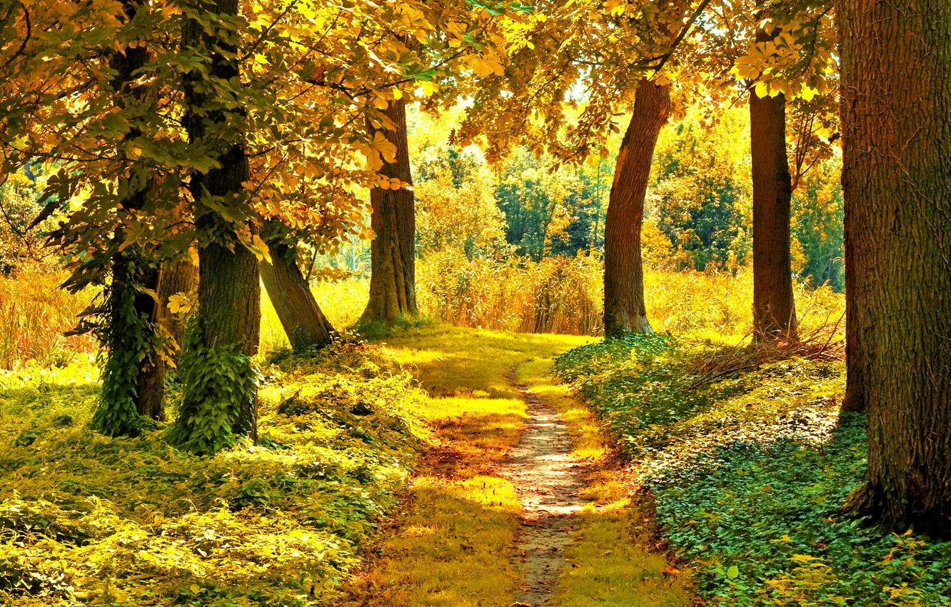Photo wallpaper autumn, forest, grass, leaves, the sun, trees, branches, nature, yellow, green, path