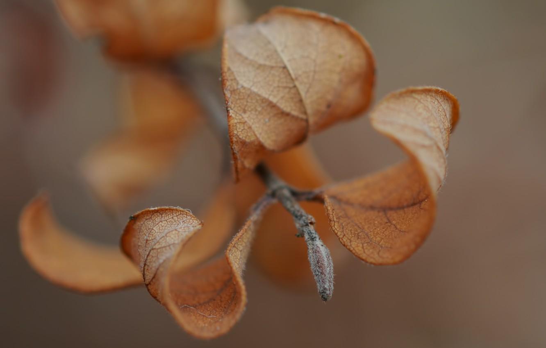 Photo wallpaper autumn, leaves, macro, sprig, macro