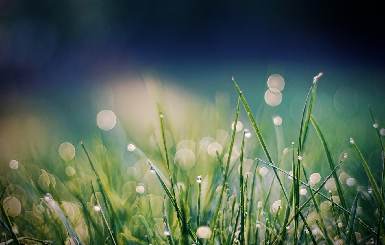 Photo wallpaper grass, Rosa, bokeh