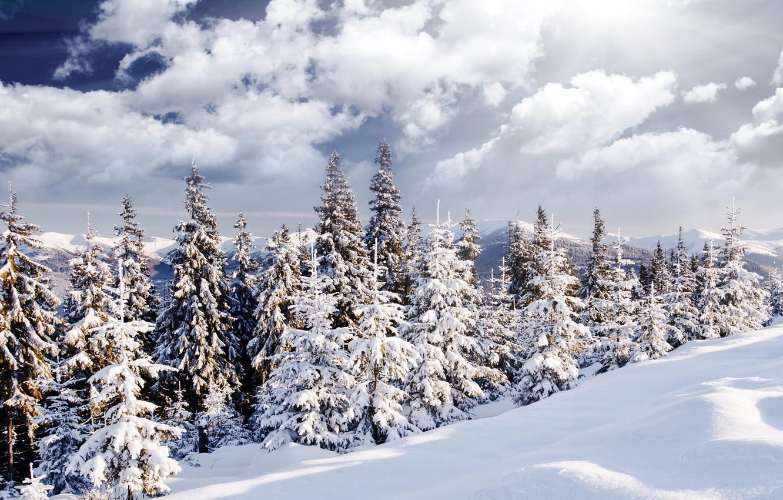 Photo wallpaper winter, forest, the sun, snow, landscape, nature, tree